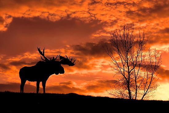 moosesunset.jpg